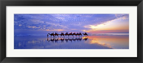 Framed Cable Beach Camels Print
