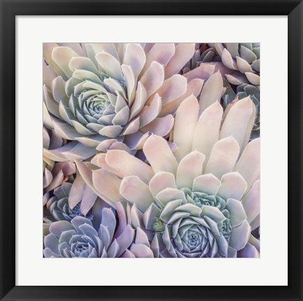 Framed Succulents II Print