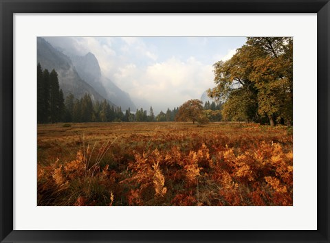 Framed Meadow Print