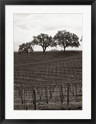 Framed Paso Robles Toned Print