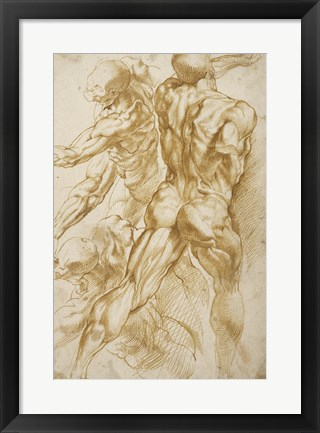 Framed Anatomical Studies Print