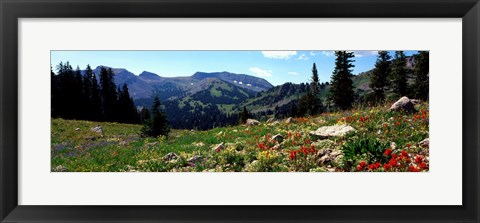 Framed Wildflowers in a field, Rendezvous Mountain, Teton Range, Grand Teton National Park, Wyoming, USA Print