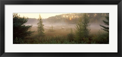 Framed Forest, Northern Highland-American Legion State Forest, Vilas County, Wisconsin, USA Print