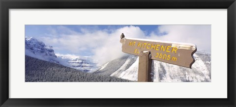 Framed Clark's Nutcracker (Nucifraga columbiana) perching on mountain sign, Mt. Kitchener, Jasper National Park, Alberta, Canada Print