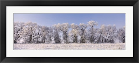 Framed Cottonwood trees covered with snow, Lower Klamath Lake, Siskiyou County, California, USA Print