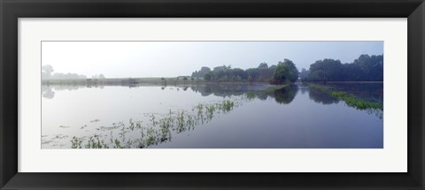 Framed Standing floodwater, Mississippi River, Illinois, USA Print