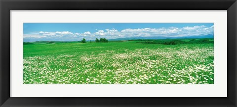 Framed Meadow flowers, Daisy field Print