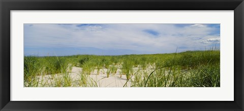 Framed Sand dunes at Crane Beach, Ipswich, Essex County, Massachusetts, USA Print