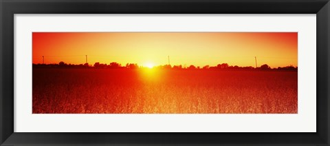 Framed Soybean field at sunset, Wood County, Ohio, USA Print
