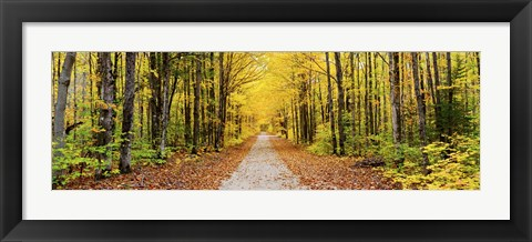 Framed Trees along a pathway in autumn, Hiawatha National Forest, Alger County, Upper Peninsula, Michigan, USA Print