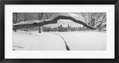 Framed Bare trees in a park, Lincoln Park, Chicago, Illinois, USA Print