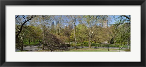 Framed Trees in a park, Central Park West, Central Park, Manhattan, New York City, New York State, USA Print
