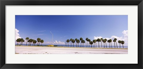 Framed Palm trees at the roadside, Interstate 275, Tampa Bay, Gulf of Mexico, Florida, USA Print
