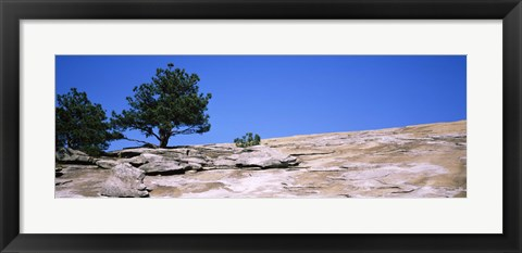 Framed Trees on a mountain, Stone Mountain, Atlanta, Fulton County, Georgia Print