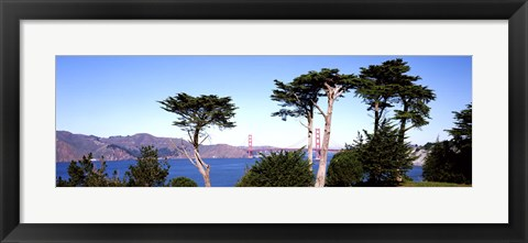 Framed View of a suspension  bridge through trees, Golden Gate Bridge, San Francisco Bay, San Francisco, California, USA Print