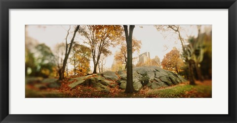 Framed Trees in a park, Central Park, Manhattan, New York City, New York State, USA Print