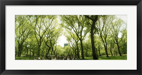 Framed Central Park in the spring time, New York City Print