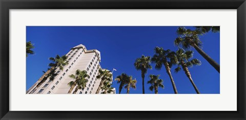 Framed Low angle view of palm trees, Downtown San Jose, San Jose, Silicon Valley, Santa Clara County, California Print