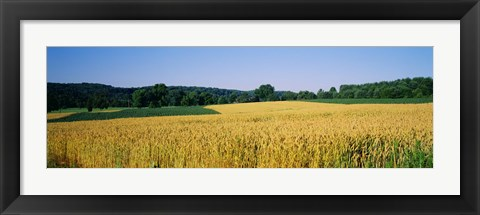 Framed Field Crop, Maryland, USA Print