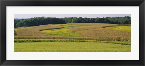 Framed Field Of Corn Crops, Baltimore, Maryland, USA Print