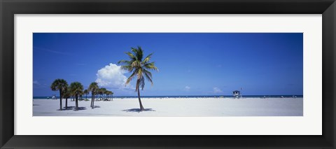 Framed Palm Trees in Miami Print