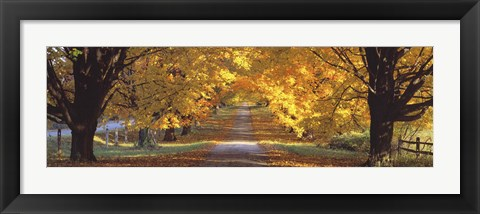 Framed Road, Baltimore County, Maryland, USA Print