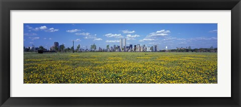 Framed Yellow Flowers in a park with Manhattan in the background, New York City Print