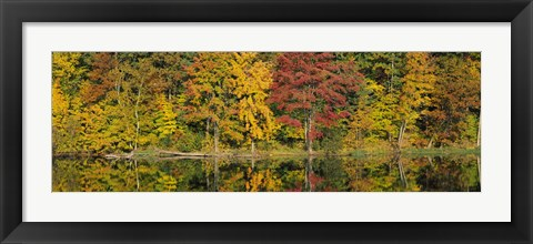 Framed Reflection of trees in water, Saratoga Springs, New York City, New York State, USA Print