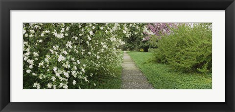 Framed Path In A Park, Richmond, Virginia, USA Print