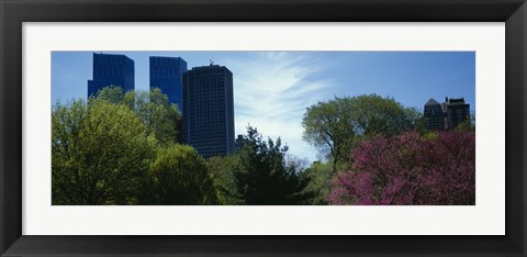 Framed Low angle view of skyscrapers viewed from a park, Central Park, Manhattan, New York City, New York State, USA Print