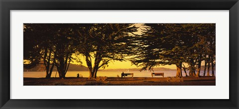 Framed Trees In A Field, Crissy Field, San Francisco, California, USA Print
