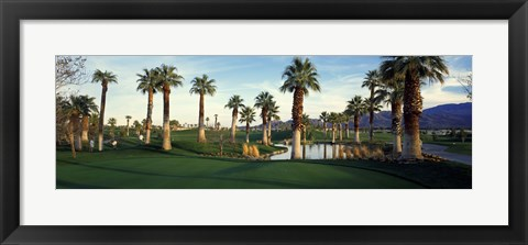 Framed Palm trees in a golf course, Desert Springs Golf Course, Palm Springs, Riverside County, California, USA Print