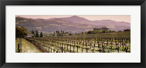 Framed Vineyard on a landscape, Asti, California, USA Print