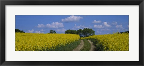 Framed Path in a field, Germany Print