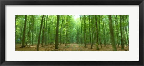 Framed Pathway Through Forest, Mastatten, Germany Print