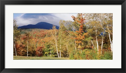 Framed Trees on a field in front of a mountain, Mount Washington, White Mountain National Forest, Bartlett, New Hampshire, USA Print