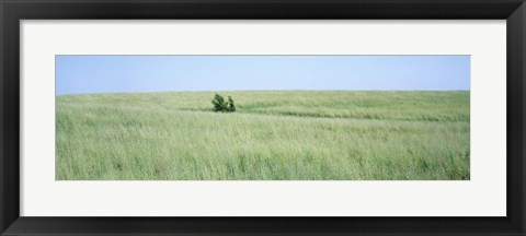 Framed Grass on a field, Prairie Grass, Iowa, USA Print