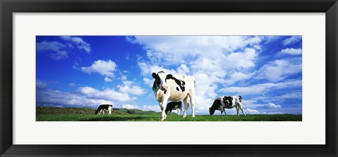 Framed Cows In Field, Lake District, England, United Kingdom Print