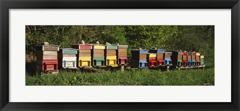 Framed Row of beehives, Switzerland Print