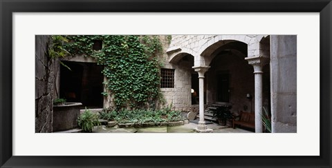 Framed Ivy on the wall of a house, Girona, Spain Print