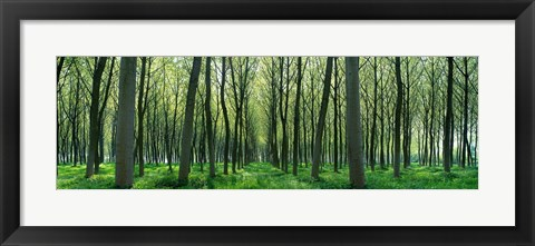 Framed Forest Trail Chateau-Thierry France Print