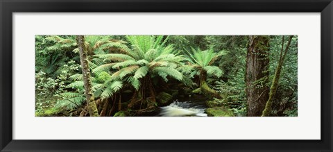 Framed Rainforest, Mt. Field National Park, Tasmania, Australia Print