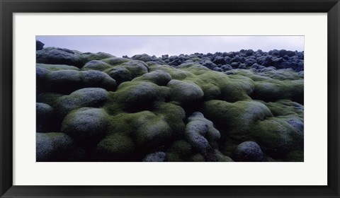 Framed Close-up of moss on rocks, Iceland Print