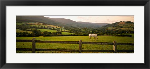 Framed Horse in a field, Enniskerry, County Wicklow, Republic Of Ireland Print