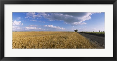Framed Wheat crop in a field, North Dakota, USA Print