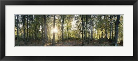 Framed Trees in a forest, Black Forest, Freiburg im Breisgau, Baden-Wurttemberg, Germany Print
