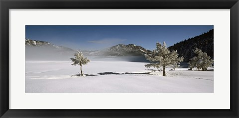 Framed Trees on a snow covered landscape, French Riviera, France Print