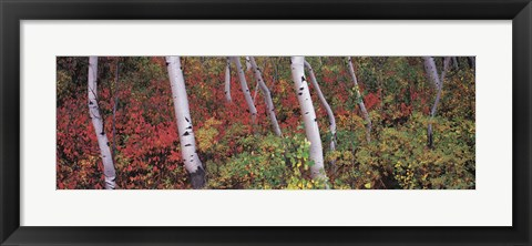 Framed Trees in a forest Print