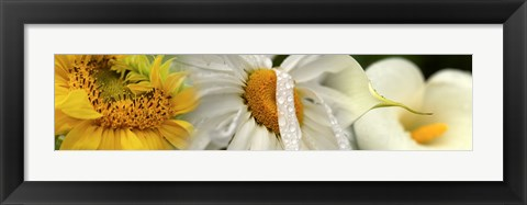 Framed Yellow and white flowers Print