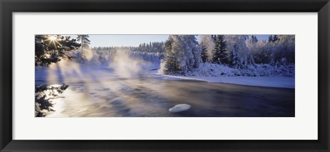 Framed Snow covered laden trees, Dal River, Sweden Print